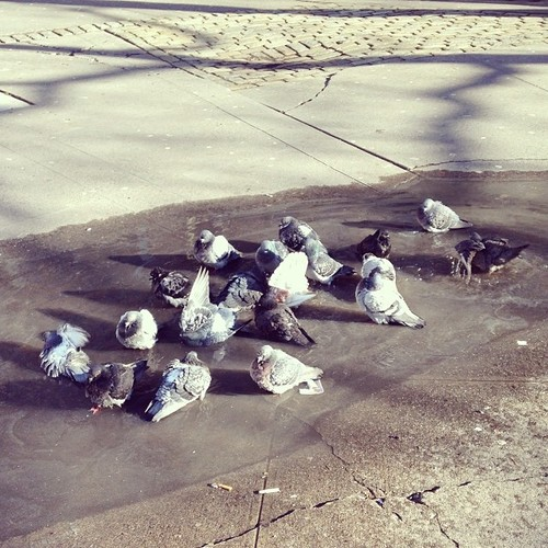 Pigeon Spa, NYC. By Kari Hansbarger