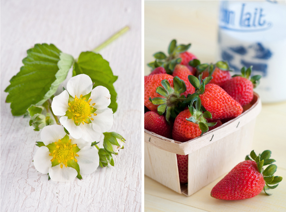 strawberry blossom and quart of berries