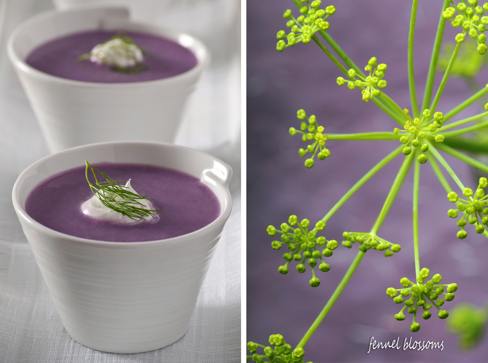 fennel and purple potato soup with fennel flowers