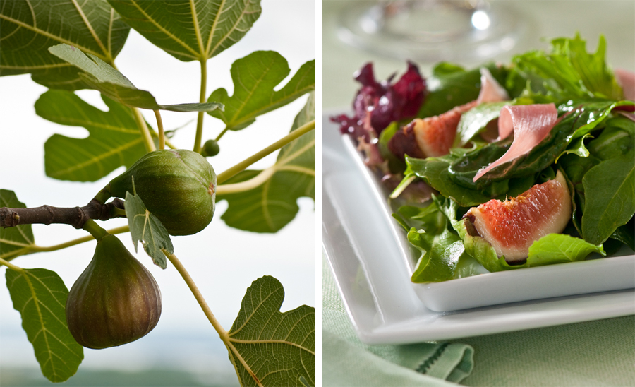 fig tree fig salad.jpg