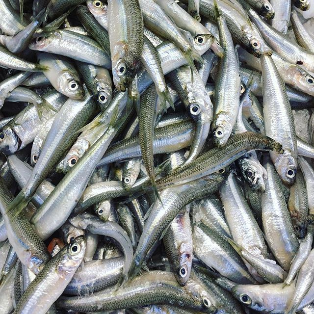 Hello Fishies #marketday #fish #instagood #foodpix #fbcigers #foodphotgraphy #eatlocal #instafood