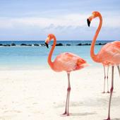 flamingosss.jpg
