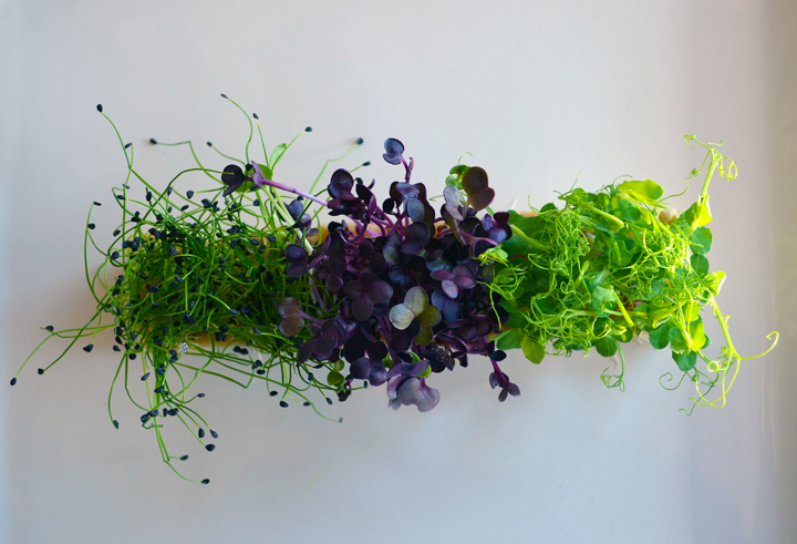 Koppert Cress: Rock Chives Cress, Sakura Cress and Affilla Cress