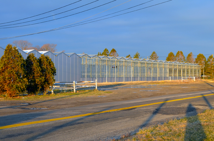 Sun Beaming on Koppert Cress' New Greenhouse in Riverhead on Sound Avenue and Horton Street.
