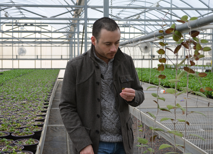 Nicolas Mazard, Director os Sales and Marketing admiring how well the trial plants are taking to their new greenhouse.