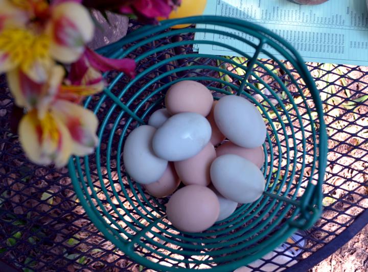 eggsbridgen.jpg