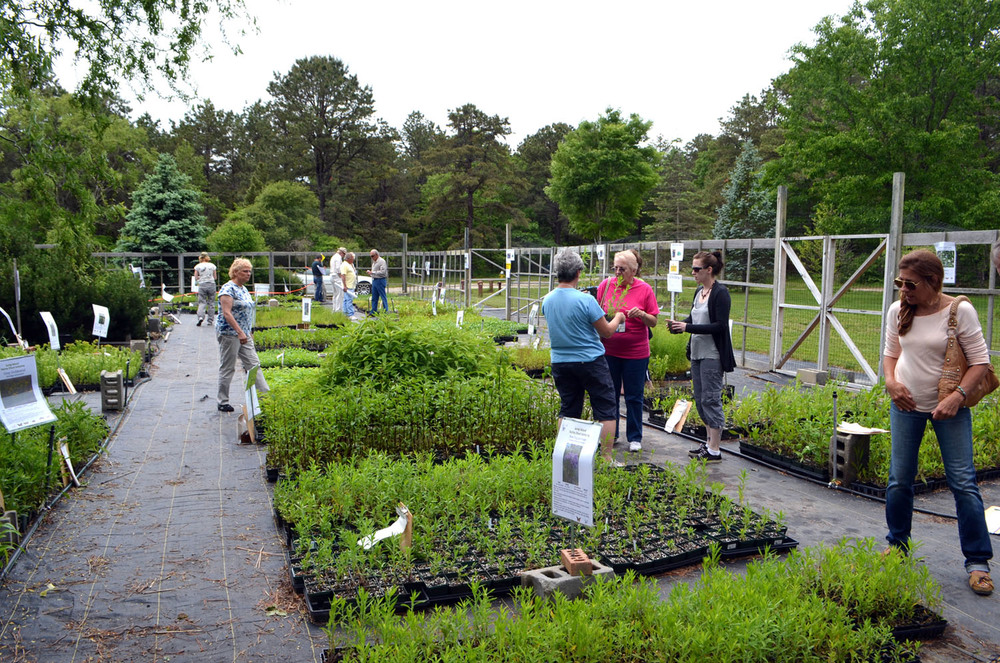 Long Island Native Plant Initiative