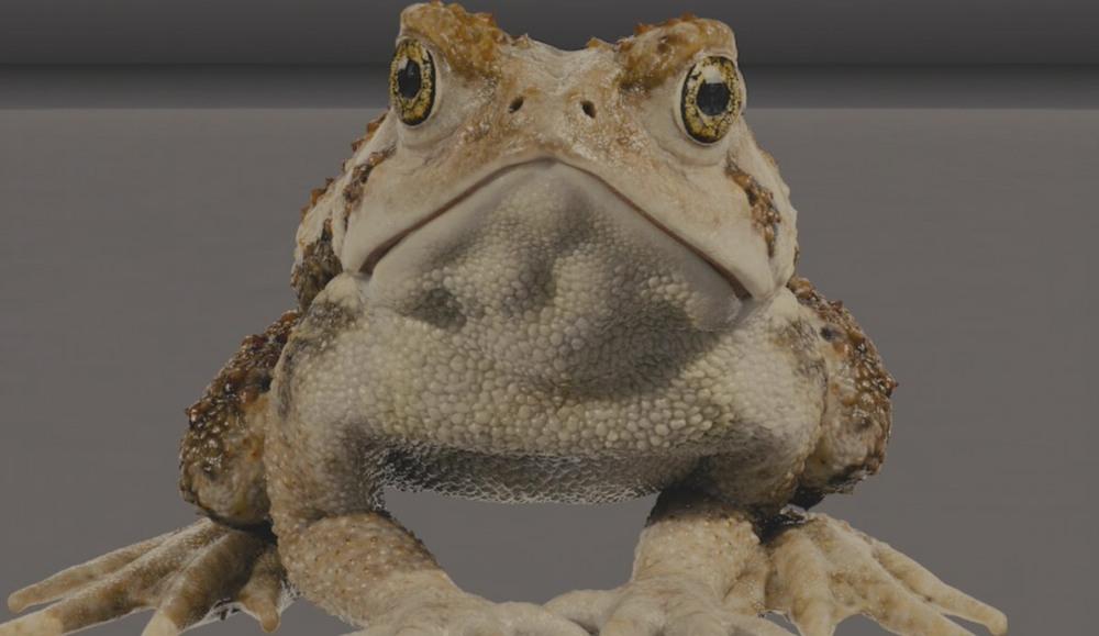 toad03.jpg