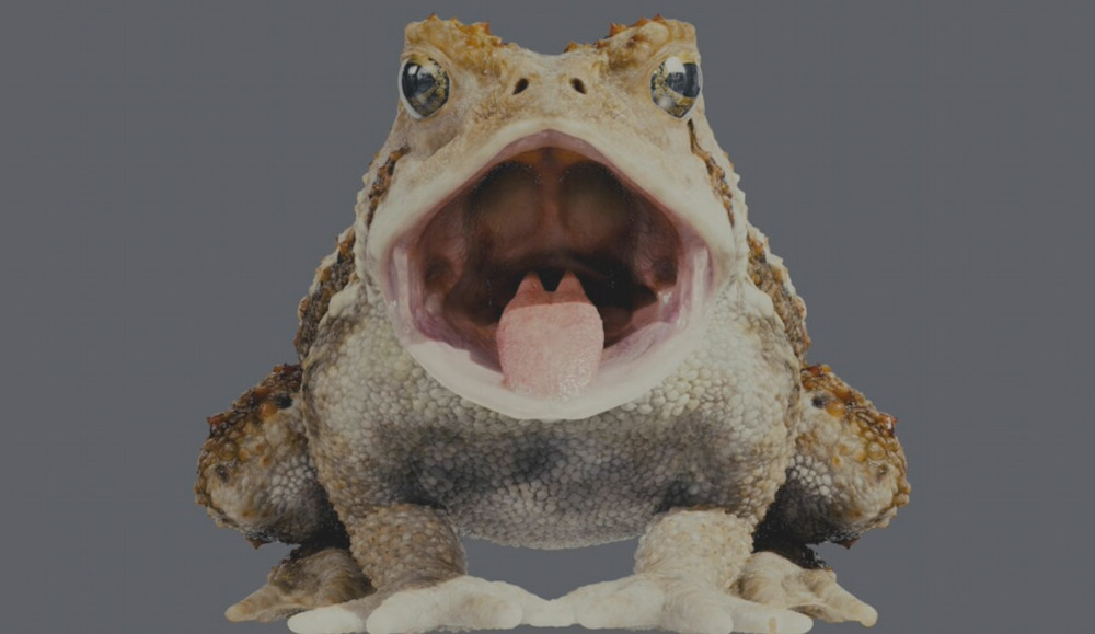 toad04.jpg