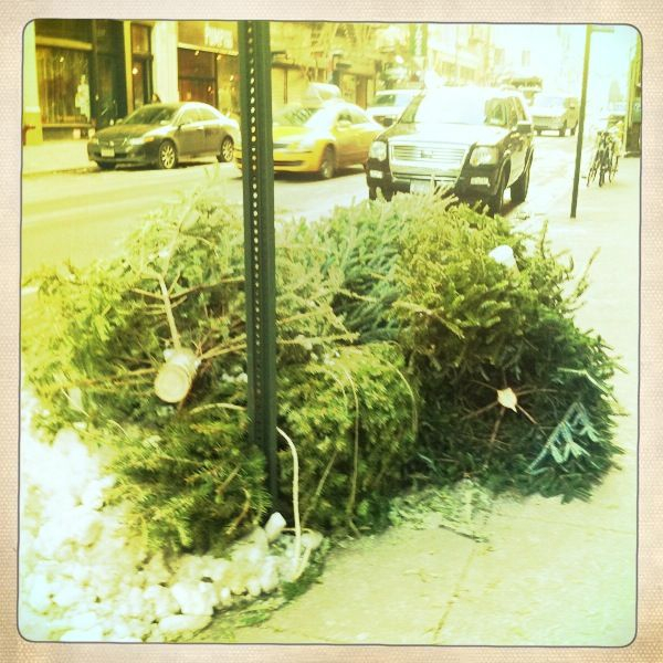 The weeks after Christmas always make me sad seeing the trees in the trash