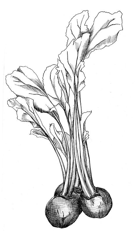 beets2.jpg