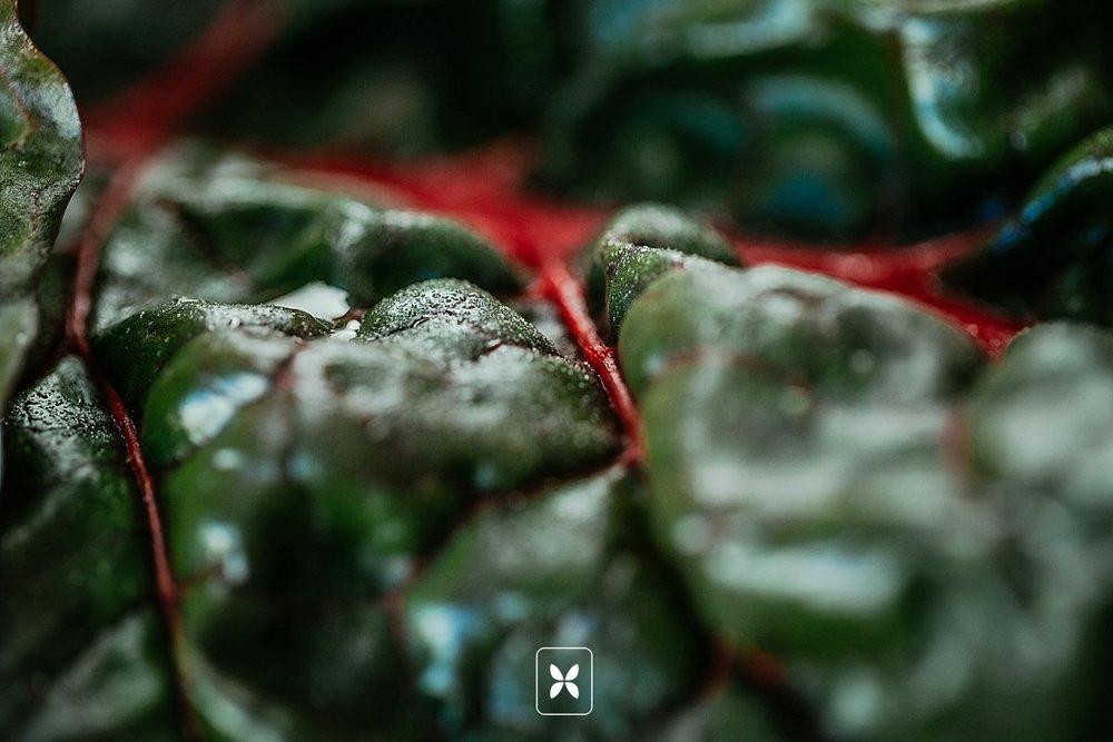 arkansas_food_photography_Novo_Studio_0015.jpg