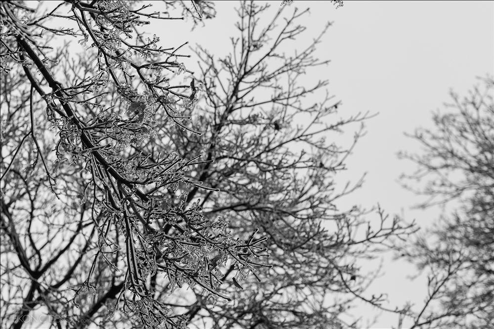 FRMS_tree2.jpg