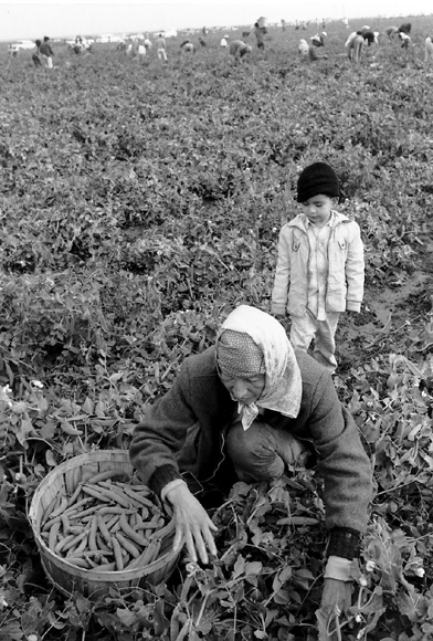 migrant field worker.jpg