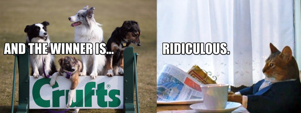 crufts-cat.jpg