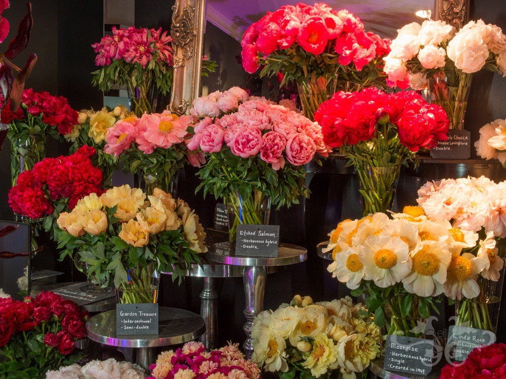 Wide range of Intersectional and Herbaceous Hybrid Peonies at The Flower Loungs. Photography: John Nassari