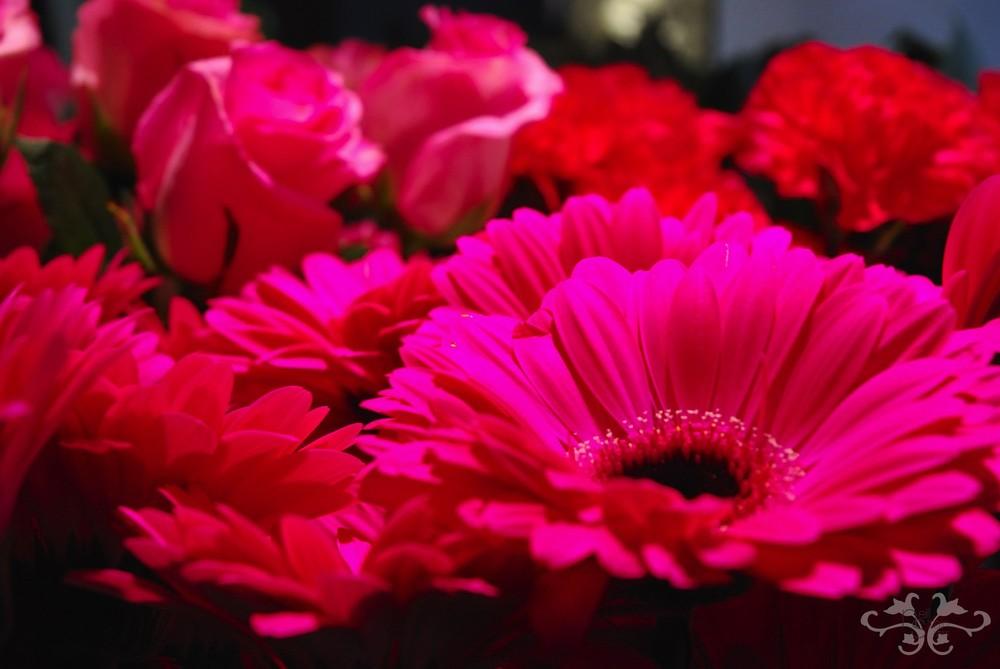 Gerberas, Roses and Carnations