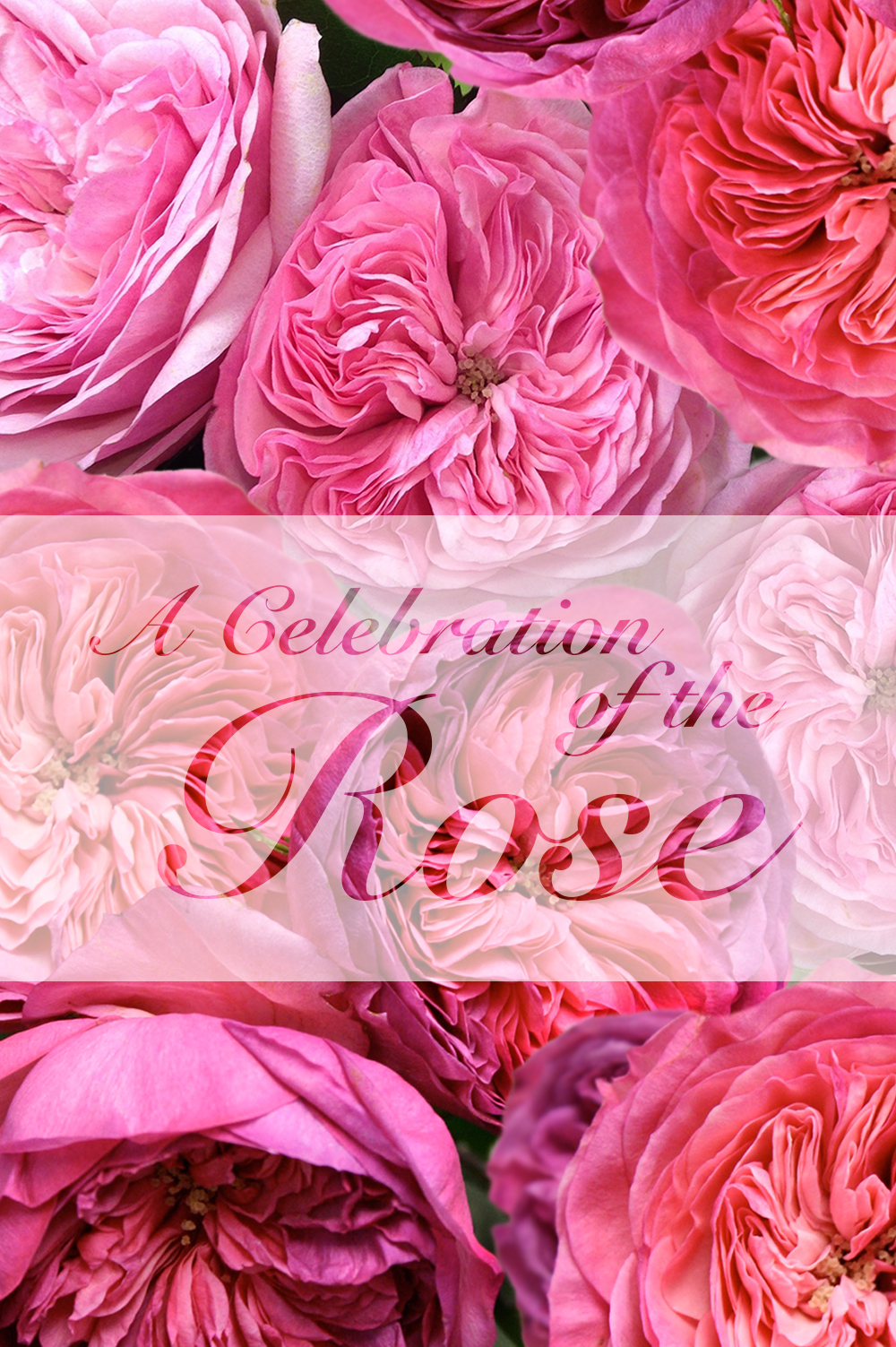 'A Celebration of the Rose' will run at Neill Strain Floral Couture's The Flower Lounge May 18-23.