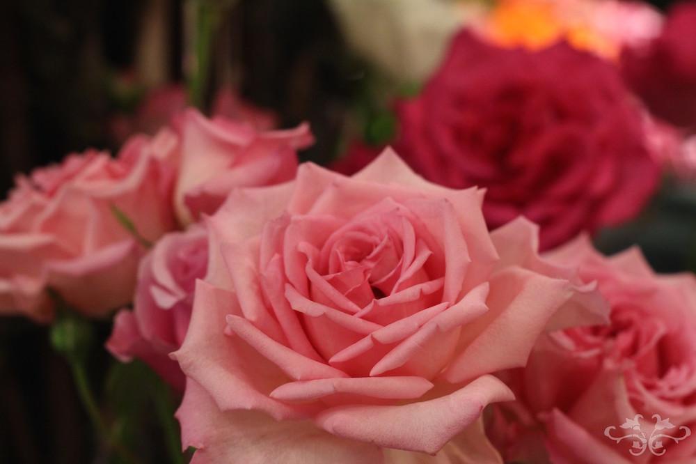Fragrant Roses.jpg