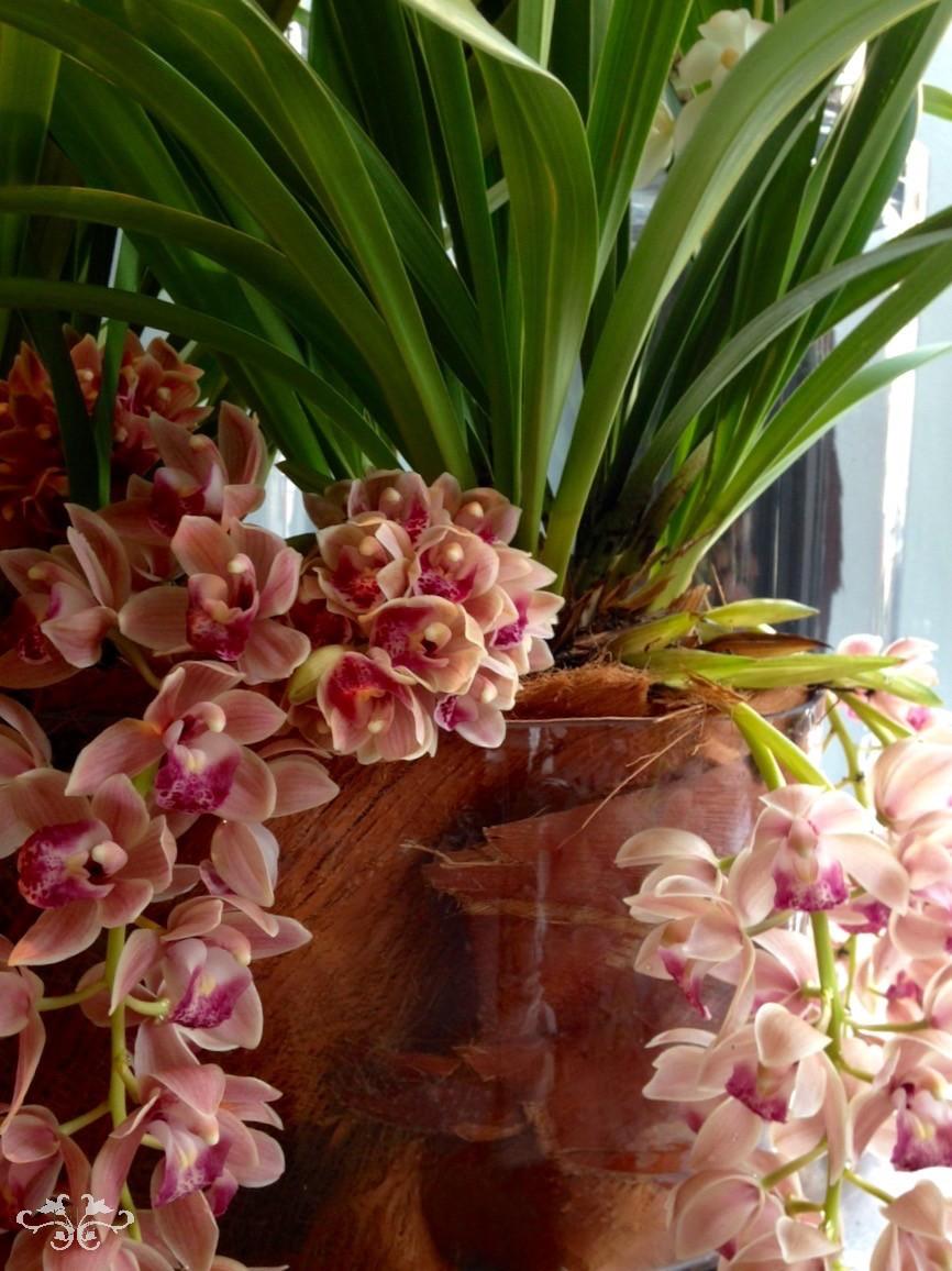 pink orchids Neill Strain.jpg