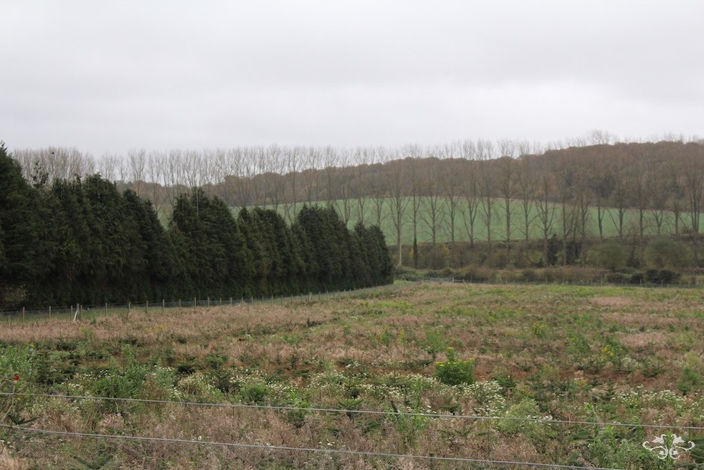 Yattendon is the largest Christmas Tree farm in England harvesting annually  over 50,000 trees. They grow primarily two varieties of trees: Norway  Spruce and ... - Where To Find The Best Christmas Trees And Christmas Tree