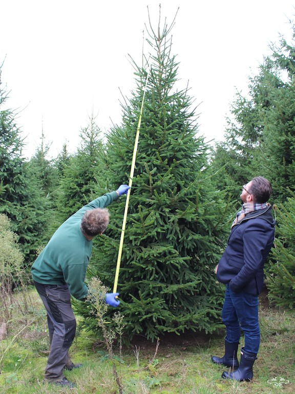 Neill Strain cutting down Christmas Tree.jpg