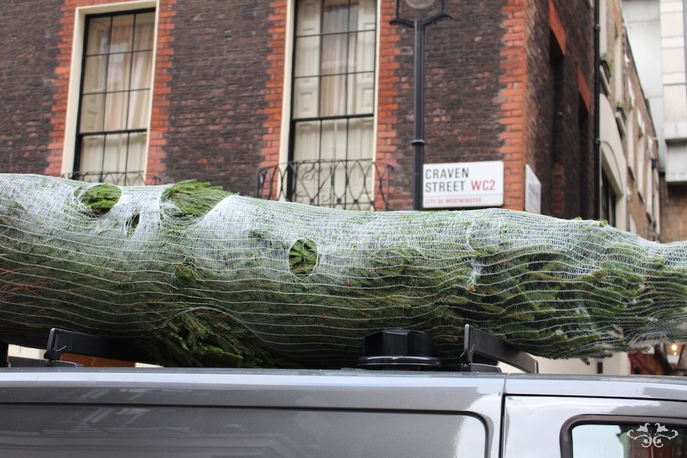 Neill Strain Christmas tree deliveries.jpg