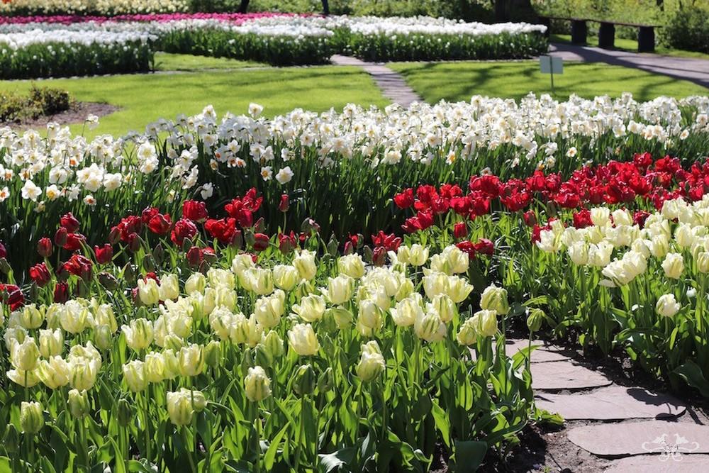 Neill Strain sourcing spring flowers.jpg
