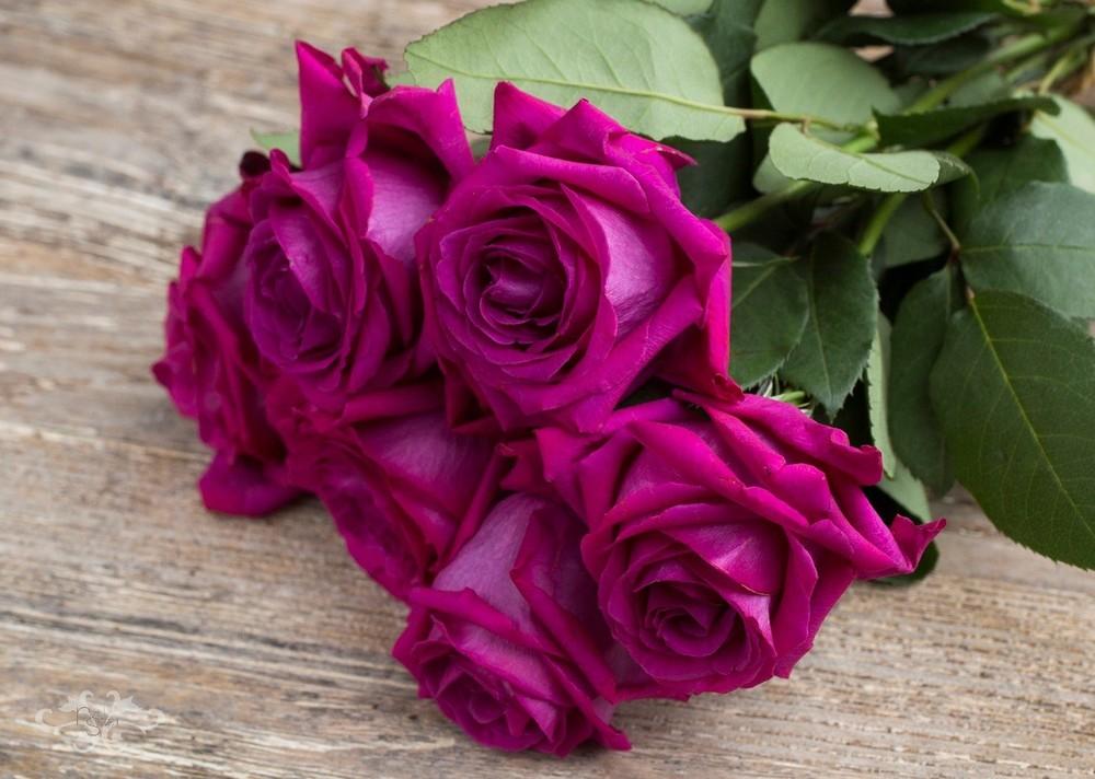 PFC-MJP-Purple-Perfumella.jpg