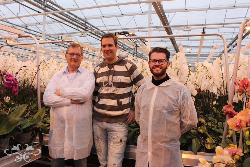 Visiting Ichtus Flowers, producers of cut Phalaenopsis; Neill Strain with Pieter Lips (part-owner) and Loek van Eeden of Pb International