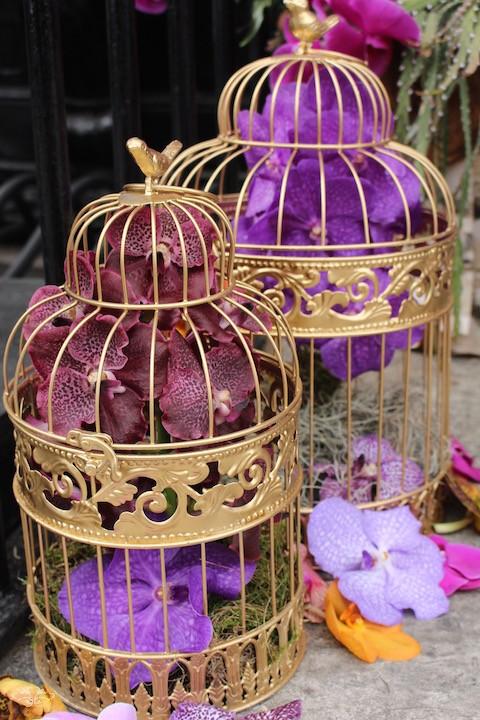 Neill Strain Vanda Orchids.jpg