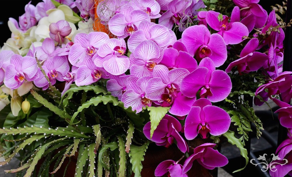 Since I Didn T Know Much About Orchids Don Think Ve Ever Fully Reciated The Wide Variety Of Shapes Textures And Colors How Truly Beautiful