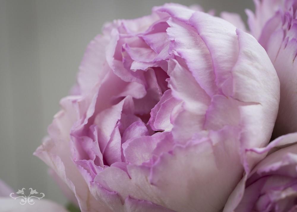 White_Pink_V7A3099.jpg