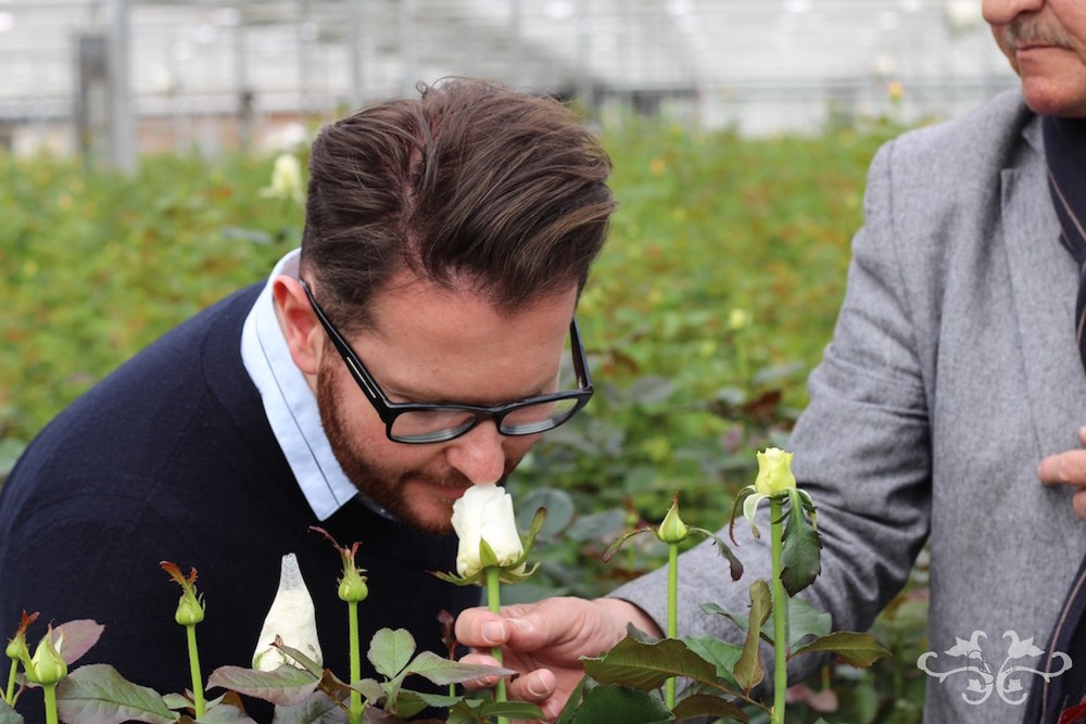Neill Strain is introduced to a new white scented Rose, still in the testing phase.
