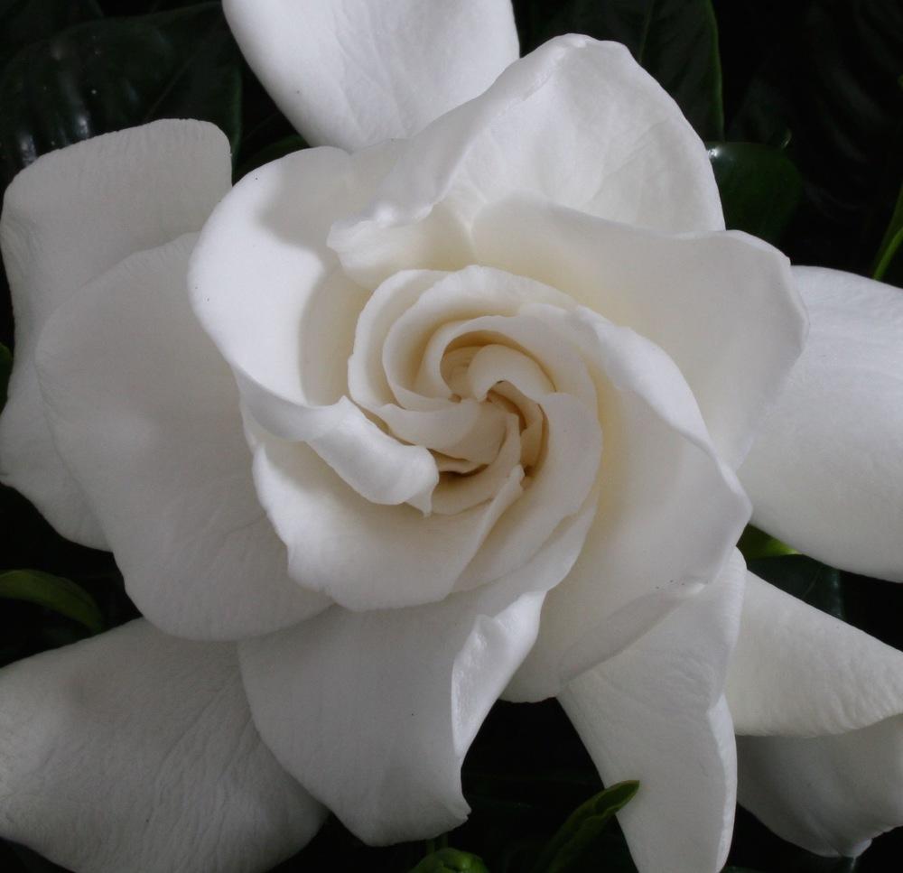 gard bloem detail (1).jpg