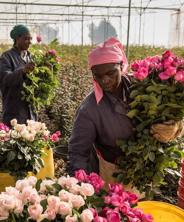 Tambuzi workers (1).jpg