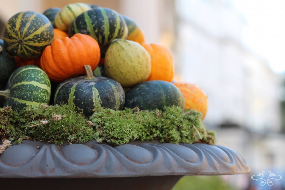 Gourds for Autumn at Neill Strain Belgravia