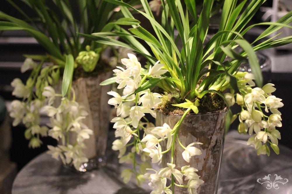 Autumn plants Neill Strain Belgravia Knightsbridge