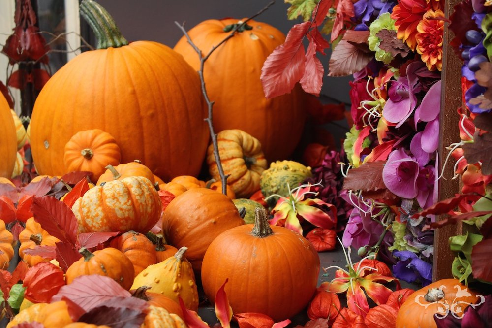 Halloween and Thanksgiving decorations feature Pumpkins, Gourds and Autumn foliage with seasonal flowers.