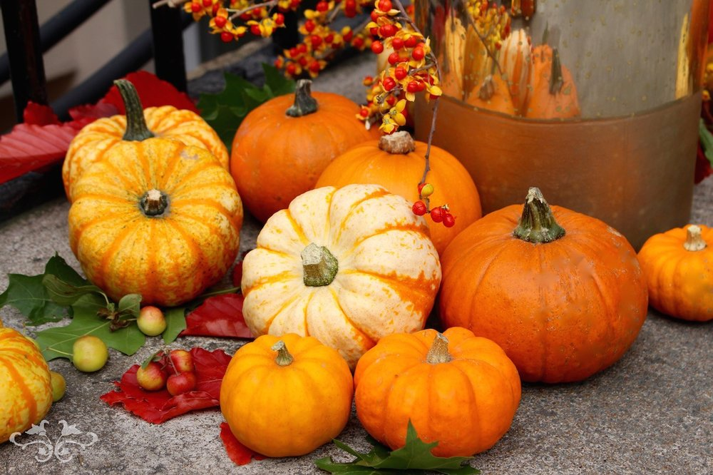 Neill Strain gourds and pumpkins for Thanksgiving Belgravia London
