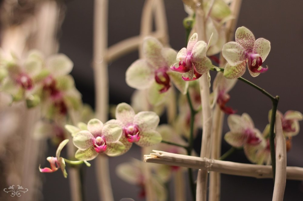 decorated orchids by Neill Strain.jpg