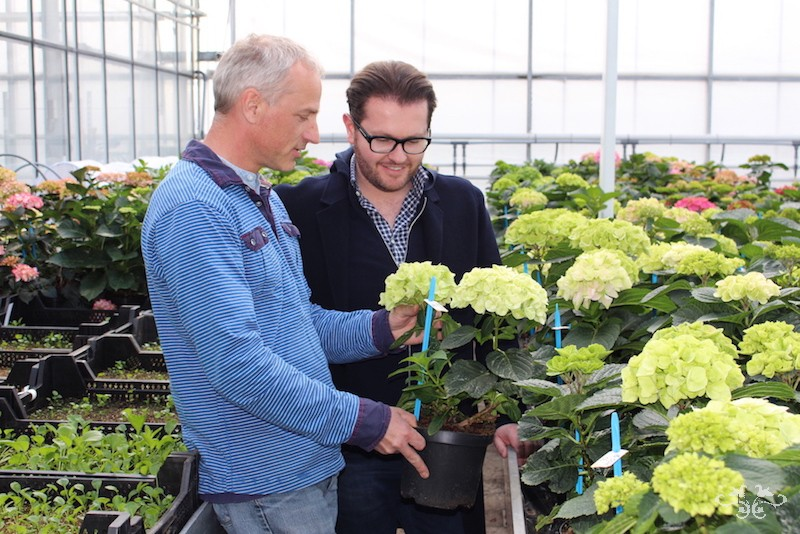 Neill Strain sourcing Hydrangeas Holland