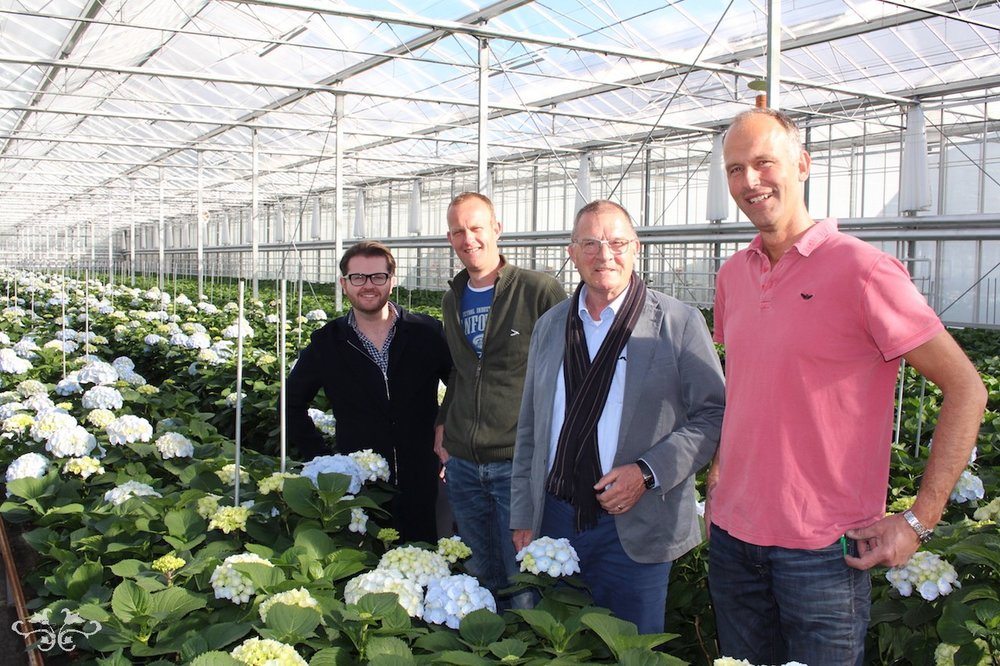 Neill+Strain+sourcing+best+Hydrangeas+in+Holland.jpg