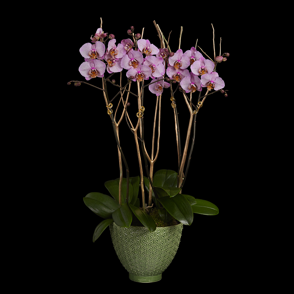 Luxury Orchid Planter designed by Neill Strain Floral Couture