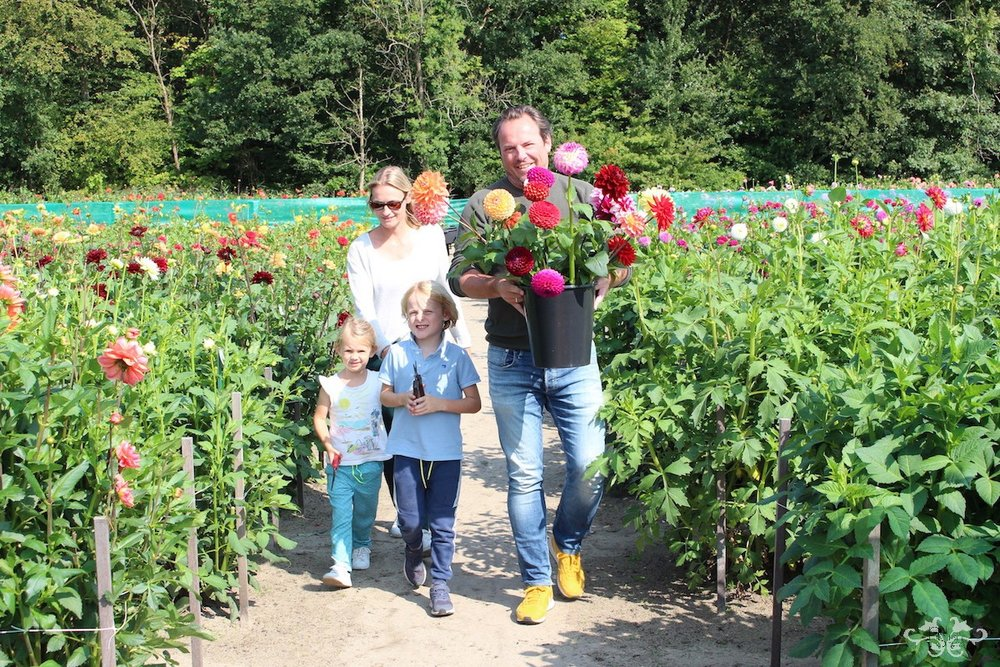 Locals visiting the Geerlings Dahlia Garden Showroom