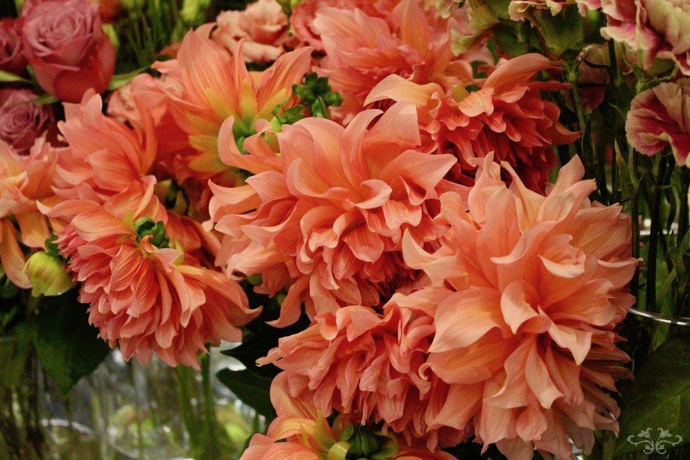 Garden Dahlias