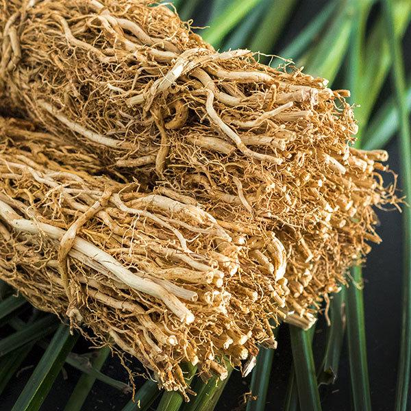 Vetiver Grass Roots.jpg