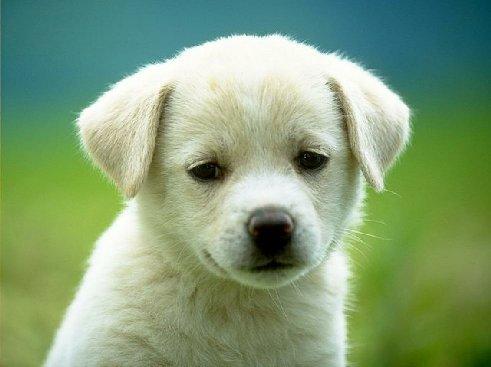 puppy_dog-7158.jpg