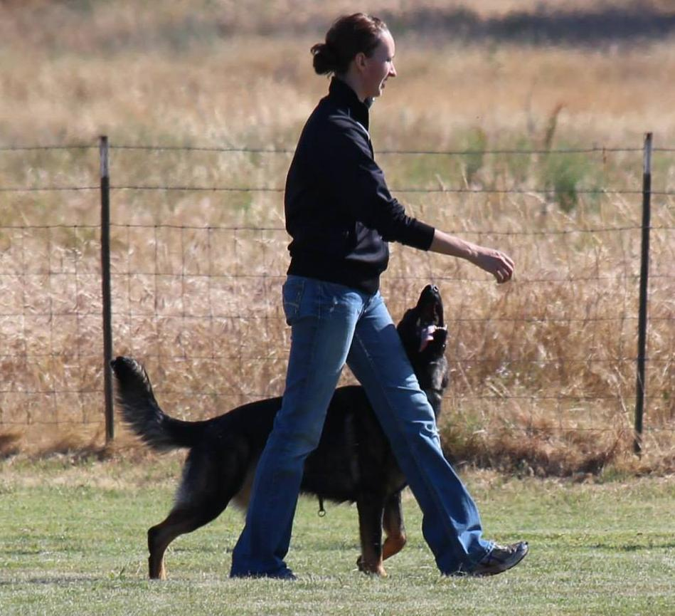 "Focused heeling in obedience. Photo: Elise with ""Ayah"""