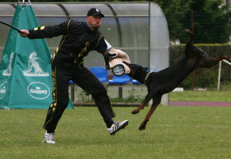 Both helper and dog must demonstrate commitment, courage, speed, athleticism, and power. Photo: Wendy's Eiko on the long bite during the 2013 International Doberman Championship in Italy.